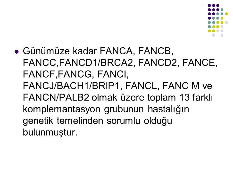 Günümüze kadar FANCA, FANCB, FANCC,FANCD1/BRCA2, FANCD2, FANCE, FANCF,FANCG, FANCI, FANCJ/BACH1/BRIP1, FANCL, FANC M ve FANCN/PALB2 olmak üzere toplam