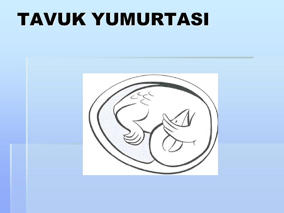 TAVUK YUMURTASI