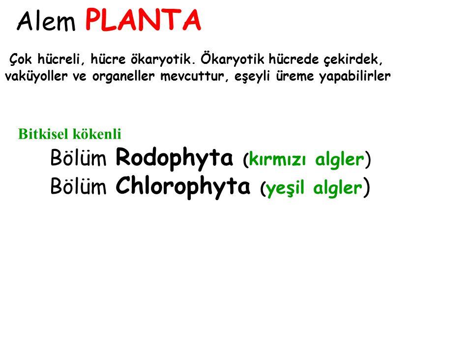 Alem PROTOCTISTA Bölüm Chrysophyta (diatomeler ve kokkolitoforlar ) kokkolitoforlar diatomeler