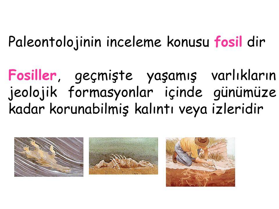 Paleontolojinin inceleme konusu fosil dir Fosiller, geçmişte yaşamış varlıkların jeolojik formasyonlar içinde günümüze kadar korunabilmiş kalıntı veya izleridir
