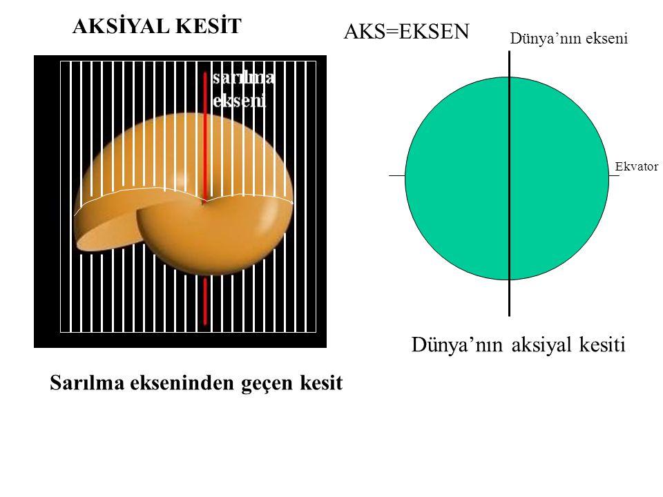 planispiral involüt planispiral evolüt