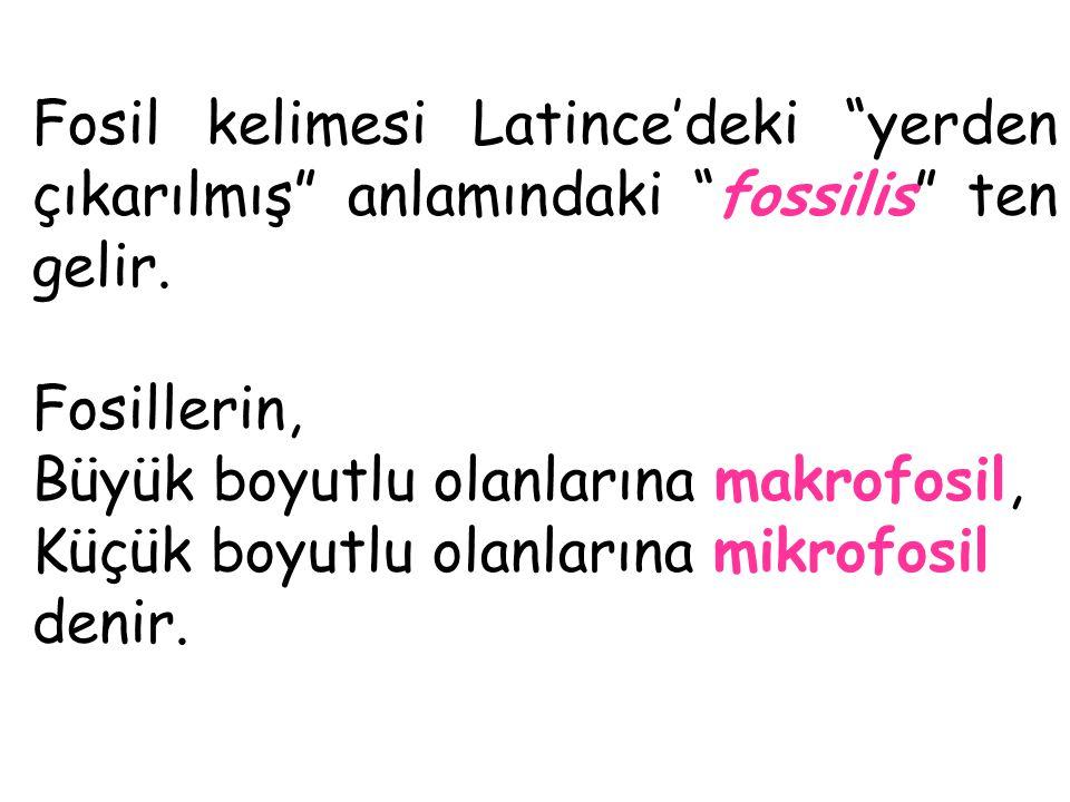 Fosil kelimesi Latince'deki yerden çıkarılmış anlamındaki fossilis ten gelir.