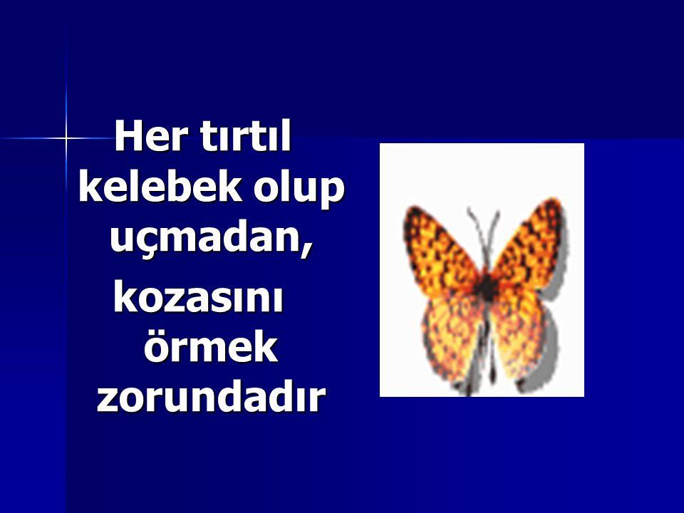 Her tırtıl kelebek olup uçmadan, Her tırtıl kelebek olup uçmadan, kozasını örmek zorundadır