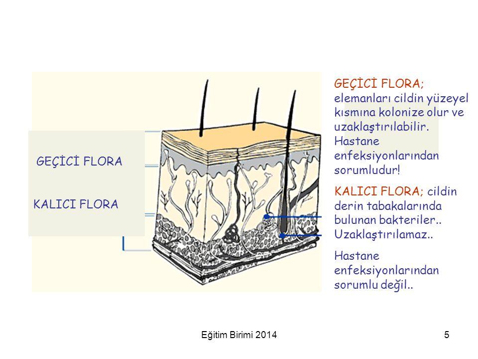 GEÇİCİ FLORA KALICI FLORA GEÇİCİ FLORA; elemanları cildin yüzeyel kısmına kolonize olur ve uzaklaştırılabilir. Hastane enfeksiyonlarından sorumludur!