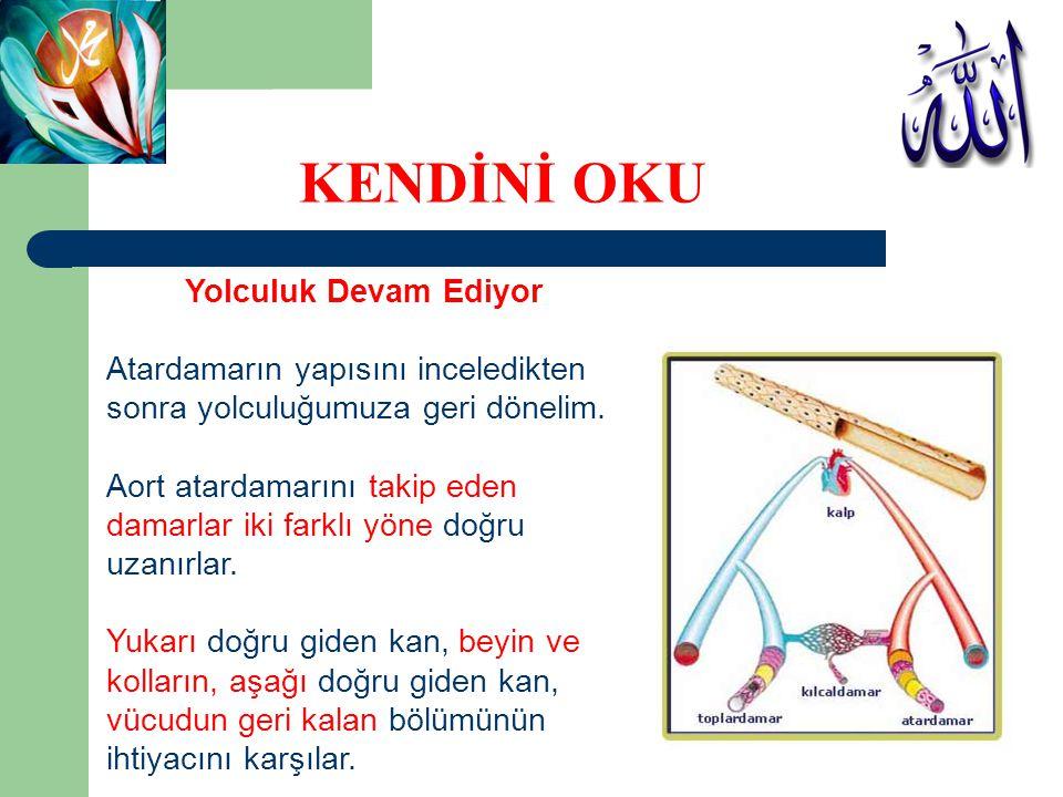 Yolculuk Devam Ediyor Atardamarın yapısını inceledikten sonra yolculuğumuza geri dönelim. Aort atardamarını takip eden damarlar iki farklı yöne doğru