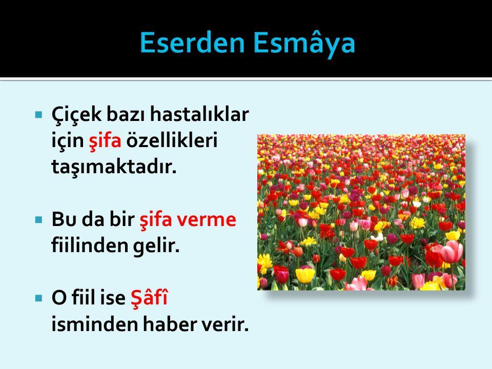  Çiçek bazı hastalıklar için şifa özellikleri taşımaktadır.