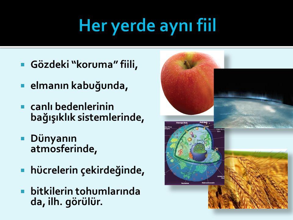  Gözdeki koruma fiili,  elmanın kabuğunda,  canlı bedenlerinin bağışıklık sistemlerinde,  Dünyanın atmosferinde,  hücrelerin çekirdeğinde,  bitkilerin tohumlarında da, ilh.