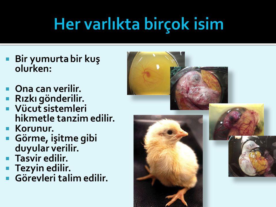  Bir yumurta bir kuş olurken:  Ona can verilir.  Rızkı gönderilir.