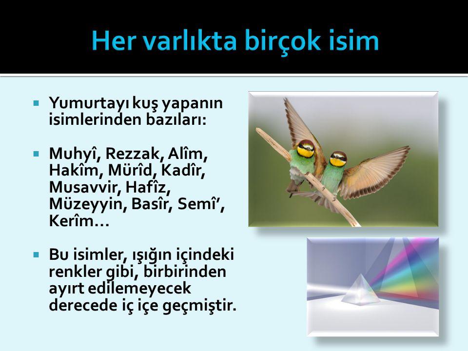  Yumurtayı kuş yapanın isimlerinden bazıları:  Muhyî, Rezzak, Alîm, Hakîm, Mürîd, Kadîr, Musavvir, Hafîz, Müzeyyin, Basîr, Semî', Kerîm...