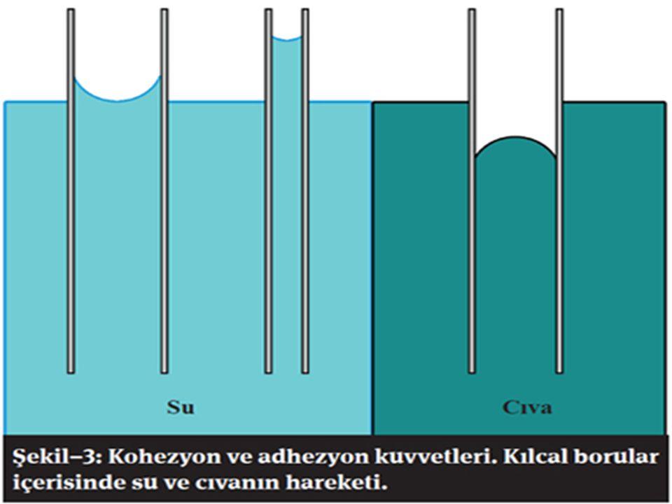 Günlük hayatımızda kullandığımız birçok madde civa tarafından ıslatılmazken su tarafından ıslatılır. Eğer suyun kohezyonu civa gibi yüksek olsaydı vüc