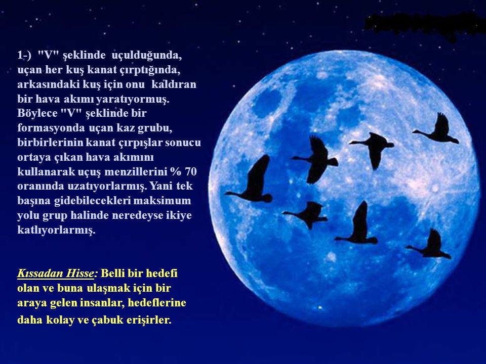 1-) V şeklinde uçulduğunda, uçan her kuş kanat çırptığında, arkasındaki kuş için onu kaldıran bir hava akımı yaratıyormuş.