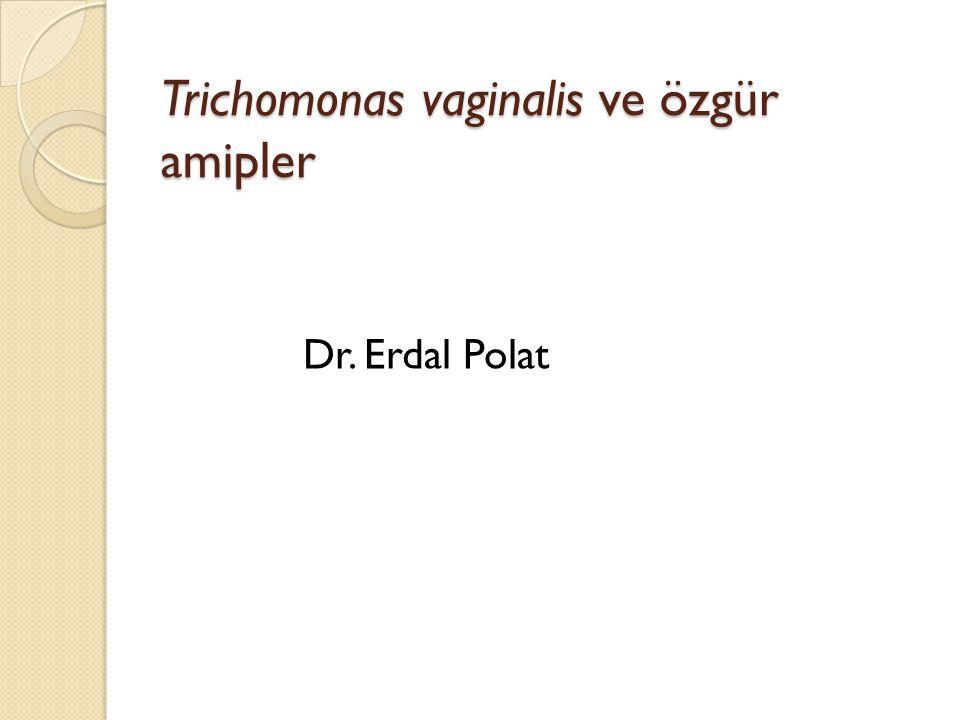 Trichomonas vaginalis Parazit skuamöz hücreleri tercih etti ğ inden, enfeksiyon üretra çevresinde yo ğ unlaşır Nadiren kadınlarda endoserviks Erkeklerde epoididim ve prostat etkilenebilir