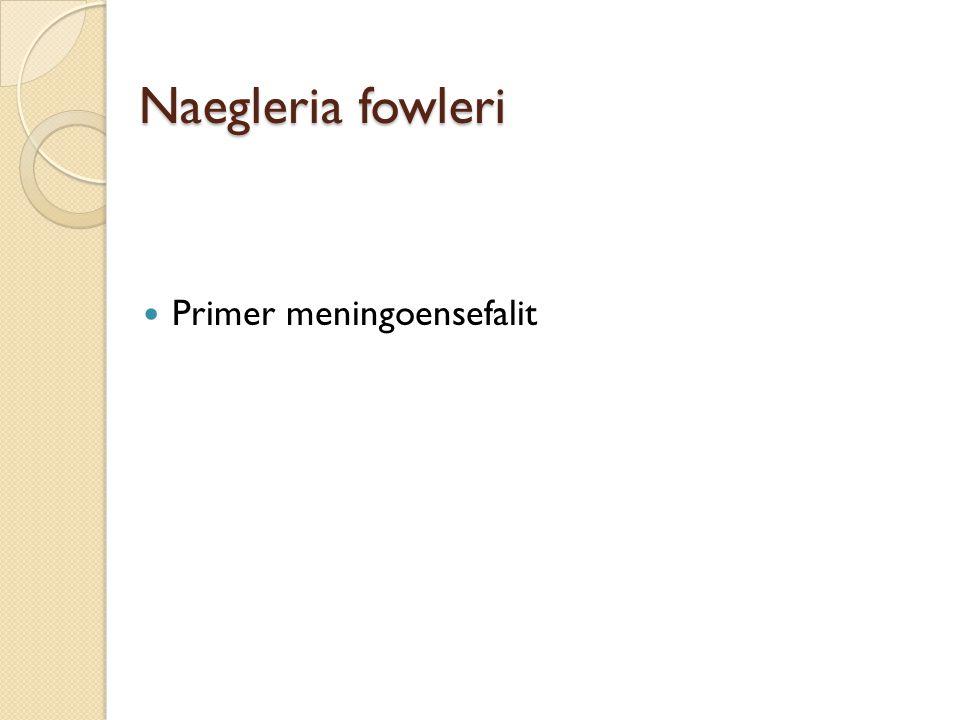 Naegleria fowleri Primer meningoensefalit