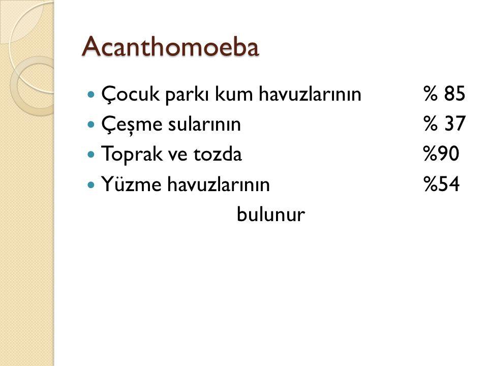 Acanthomoeba Çocuk parkı kum havuzlarının % 85 Çeşme sularının % 37 Toprak ve tozda %90 Yüzme havuzlarının %54 bulunur