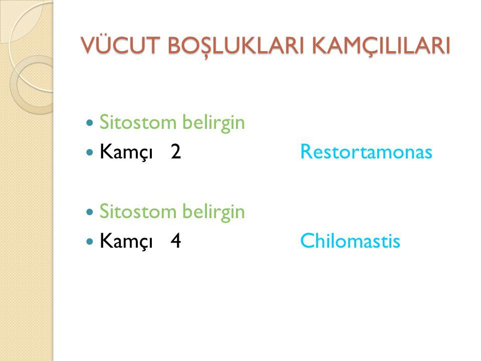 Trichomonas vaginalis Kadınlarda Asemptomatik taşıyıcılıktan Şiddetli akıntılı (köpüklü, sarı-yeşil, mükopürülan) şekille kadar de ğ işir Erkeklerde olguların ço ğ unlu ğ u asemptomatik olup NGH olgularının %10'undan sorumludur