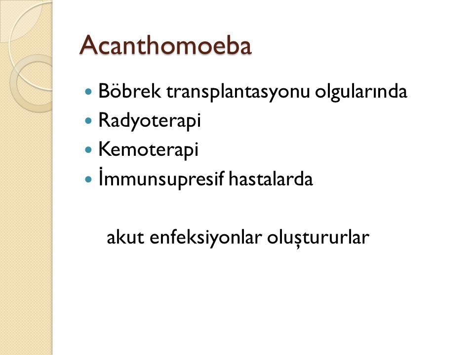 Acanthomoeba Böbrek transplantasyonu olgularında Radyoterapi Kemoterapi İ mmunsupresif hastalarda akut enfeksiyonlar oluştururlar