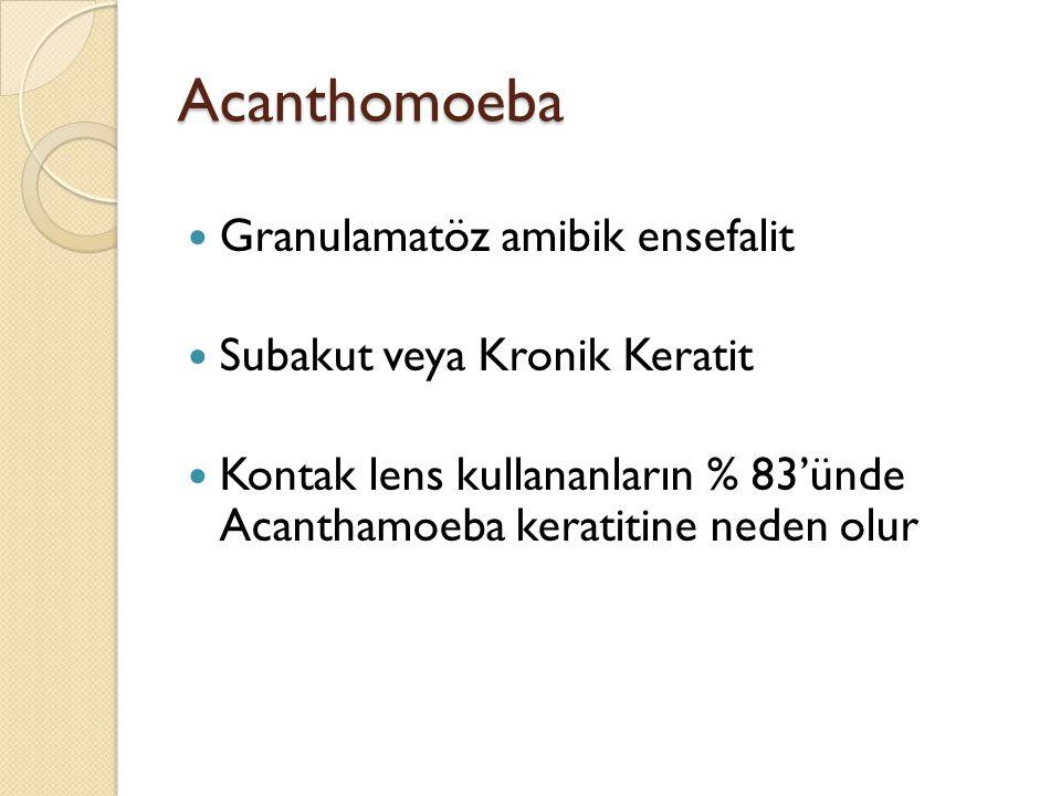 Acanthomoeba Granulamatöz amibik ensefalit Subakut veya Kronik Keratit Kontak lens kullananların % 83'ünde Acanthamoeba keratitine neden olur