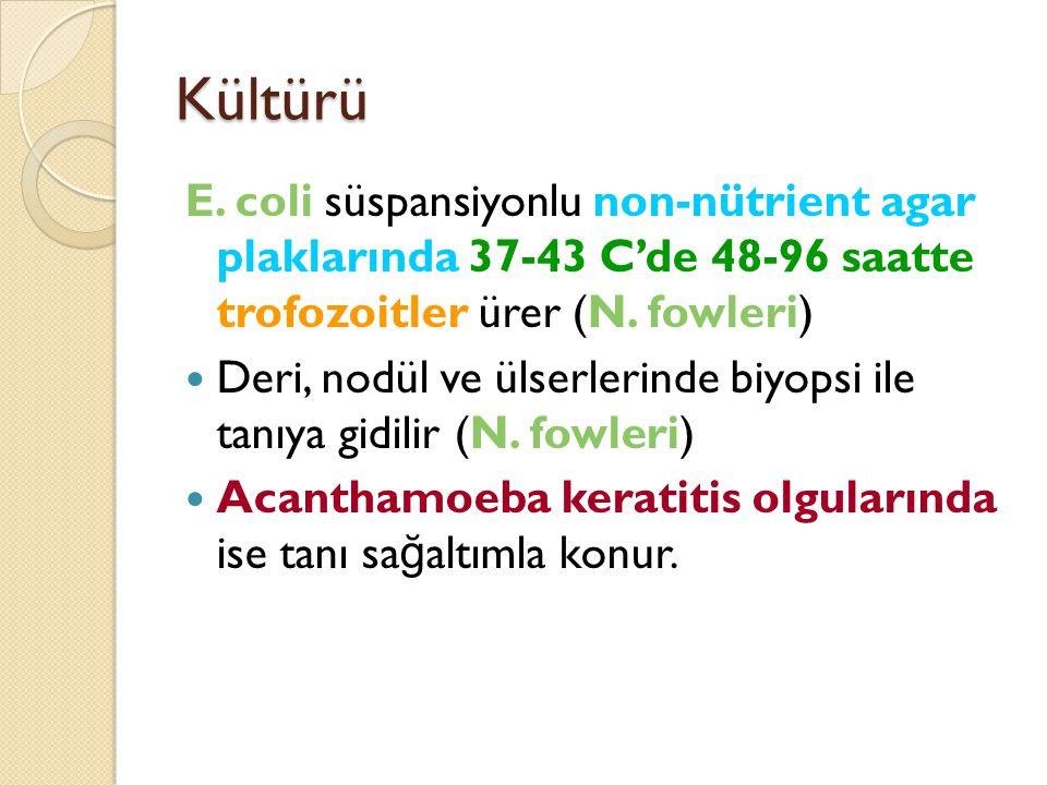 Kültürü E. coli süspansiyonlu non-nütrient agar plaklarında 37-43 C'de 48-96 saatte trofozoitler ürer (N. fowleri) Deri, nodül ve ülserlerinde biyopsi