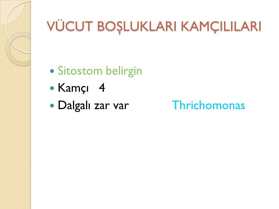 VÜCUT BOŞLUKLARI KAMÇILILARI Sitostom belirgin Kamçı 4 Dalgalı zar var Thrichomonas