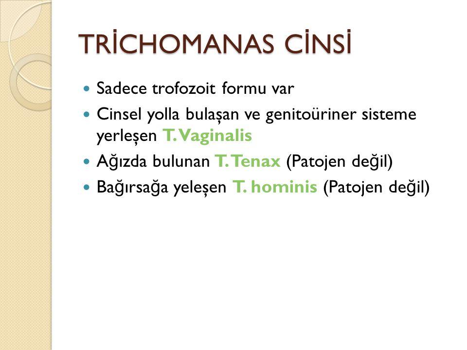 TR İ CHOMANAS C İ NS İ Sadece trofozoit formu var Cinsel yolla bulaşan ve genitoüriner sisteme yerleşen T.