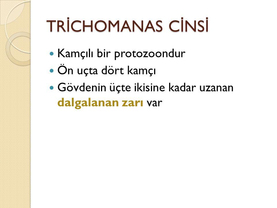 Trichomonas vaginalis İ mmunolojik DNA teknikleri.