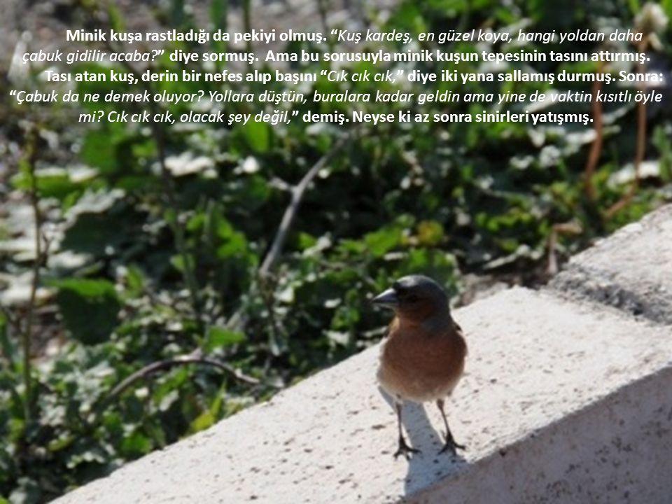Burnu sızlayan çocuk tam teşekkür etmek üzereymiş ki, Uçtu uçtu kuş uçtu, deyip, minik kuş pır diye gökyüzüne uçmuş gitmiş.