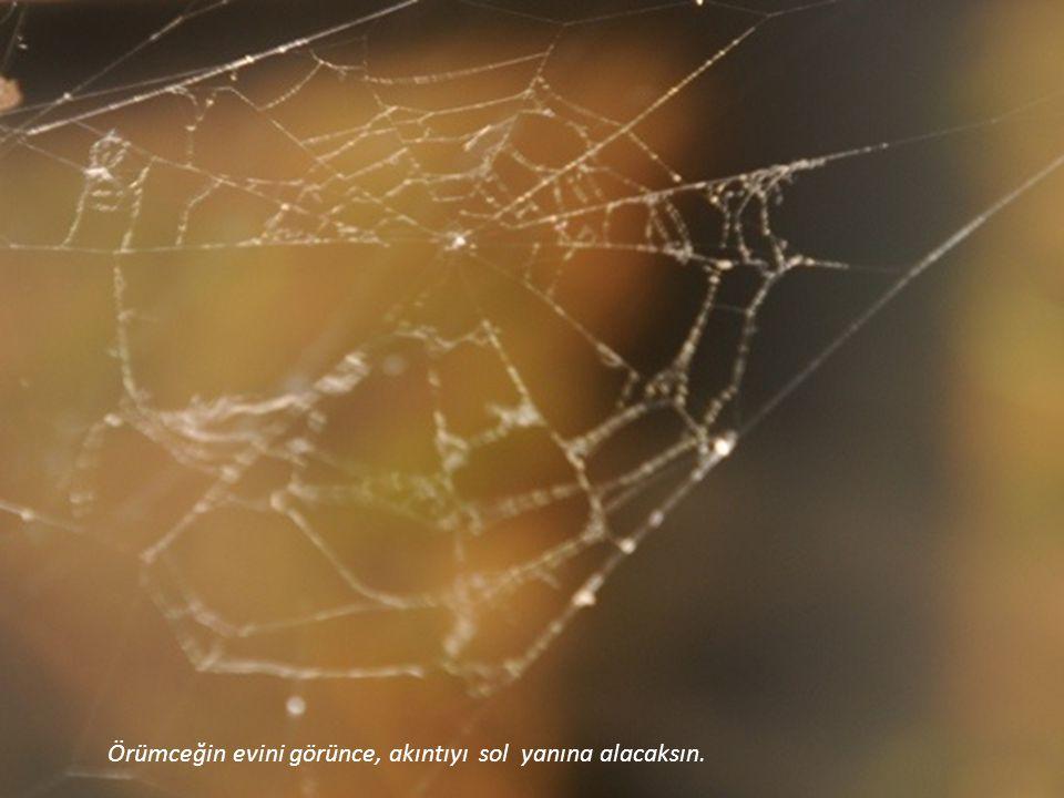 Örümceğin evini görünce, akıntıyı sol yanına alacaksın.