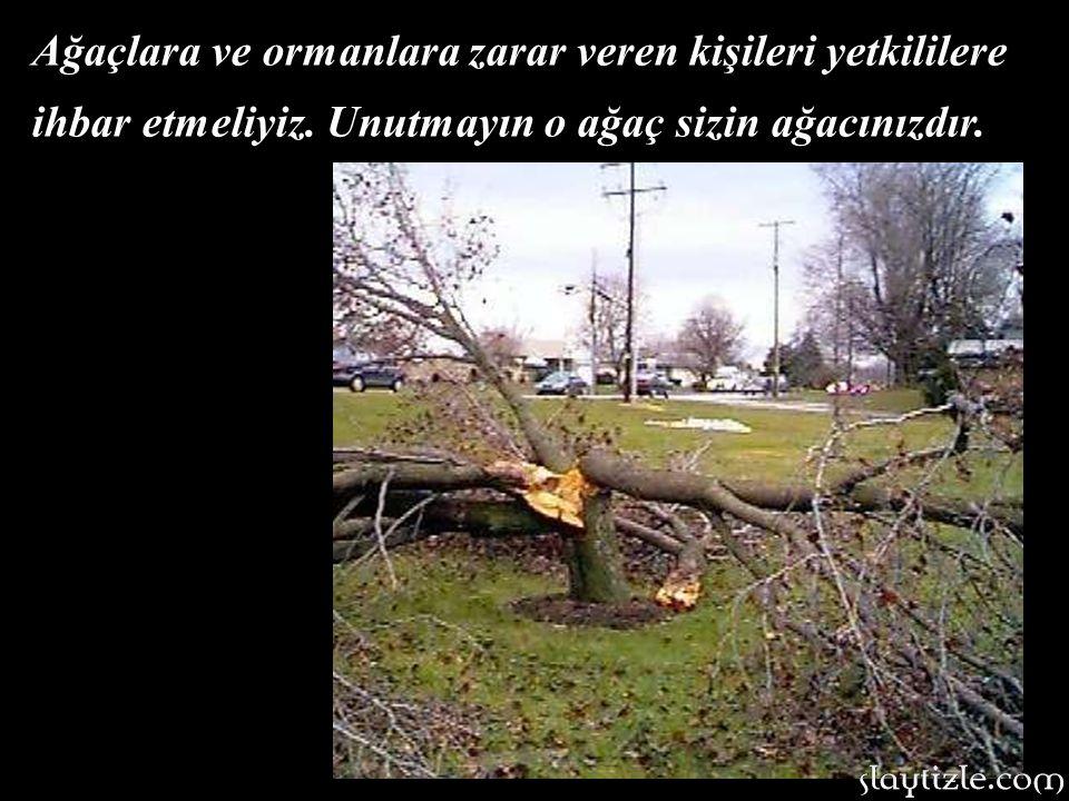 Yaş ve sağlıklı ağaçlar kesilmemelidir.