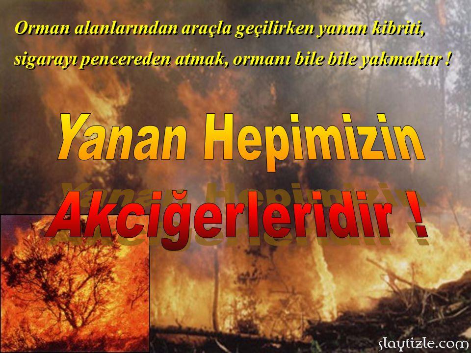 Ormanda ateş yakılmaz, sadece özel piknik alanlarında yakılabilir, onu da iyice söndürmeden piknik alanı terk edilmemelidir.
