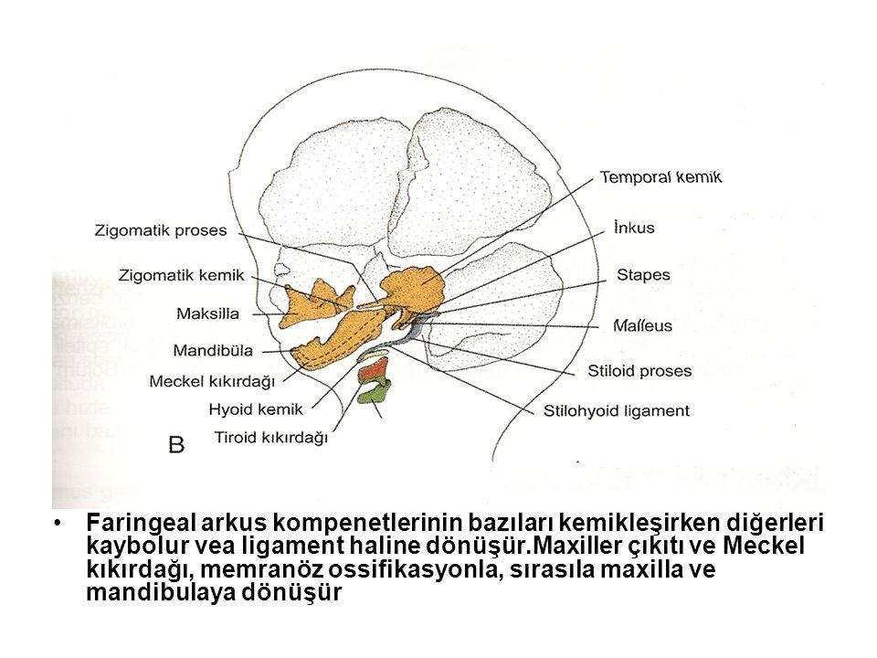 Faringeal arkus kompenetlerinin bazıları kemikleşirken diğerleri kaybolur vea ligament haline dönüşür.Maxiller çıkıtı ve Meckel kıkırdağı, memranöz os