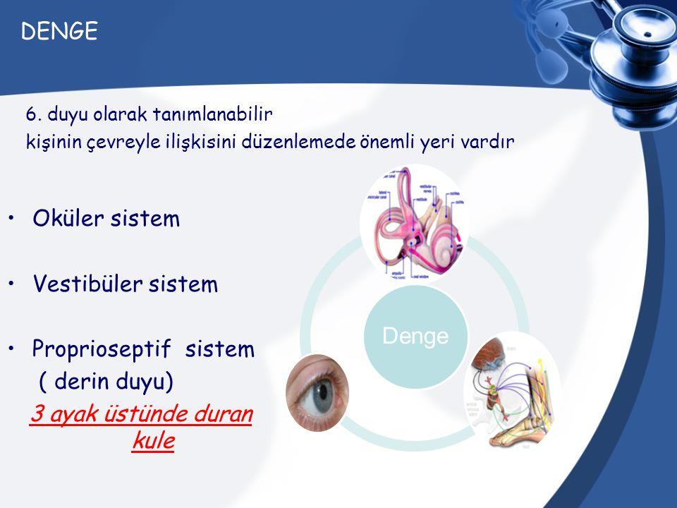 DENGE Oküler sistem Vestibüler sistem Proprioseptif sistem ( derin duyu) 3 ayak üstünde duran kule 6. duyu olarak tanımlanabilir kişinin çevreyle iliş