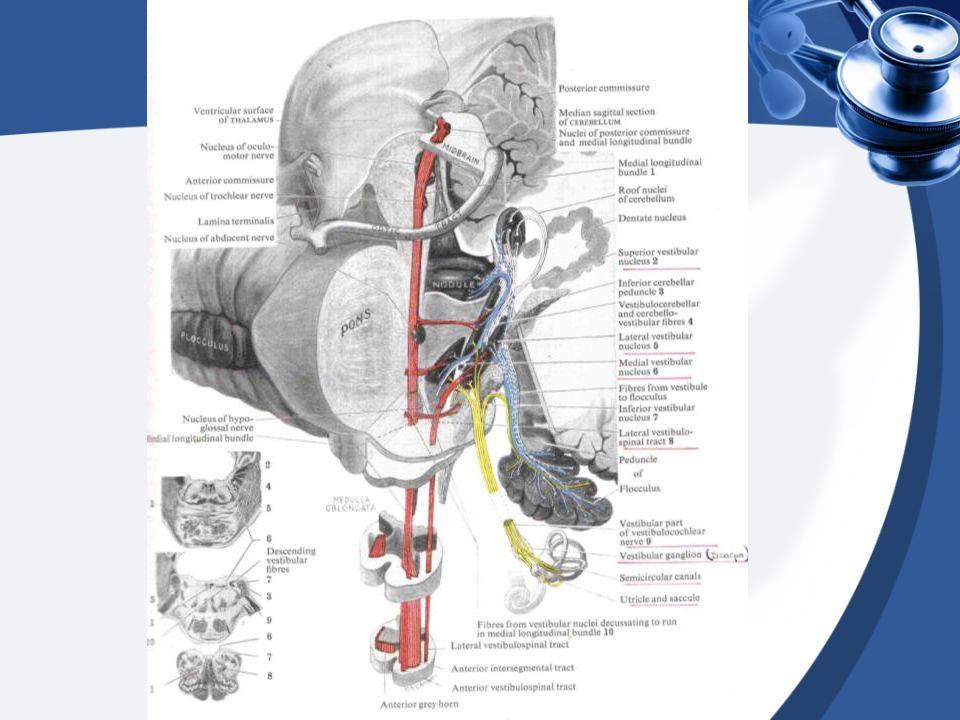 ACABA SANTRAL VERTİGO MU.Baş ağrısı Görsel, duyusal, motor kayıp var mı.