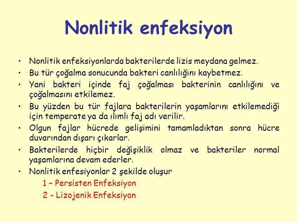 Nonlitik enfeksiyon Nonlitik enfeksiyonlarda bakterilerde lizis meydana gelmez.
