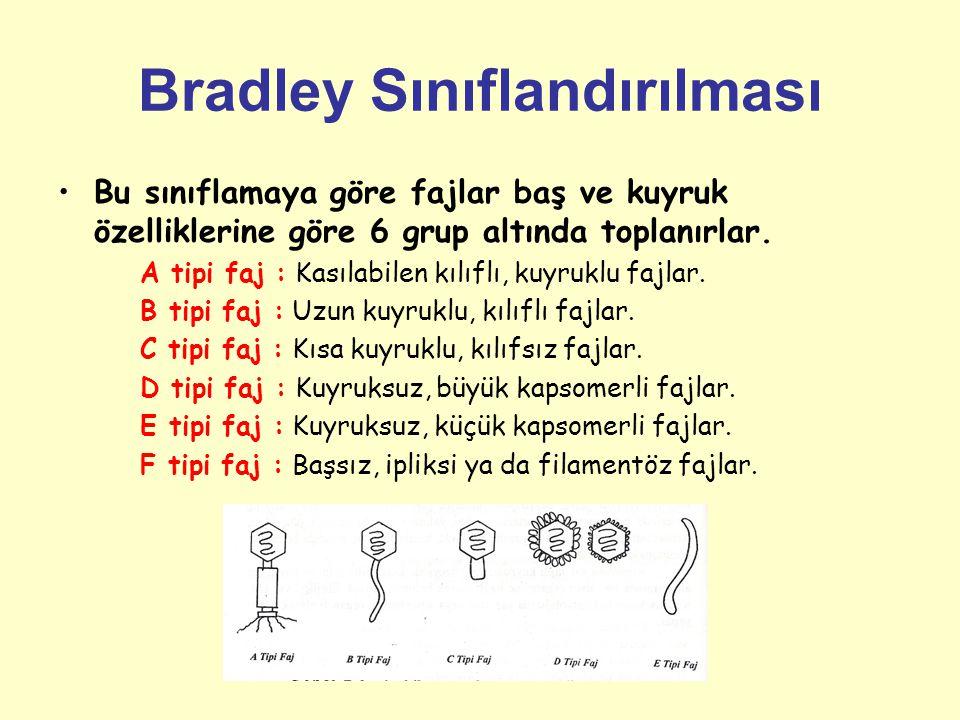Bradley Sınıflandırılması Bu sınıflamaya göre fajlar baş ve kuyruk özelliklerine göre 6 grup altında toplanırlar.