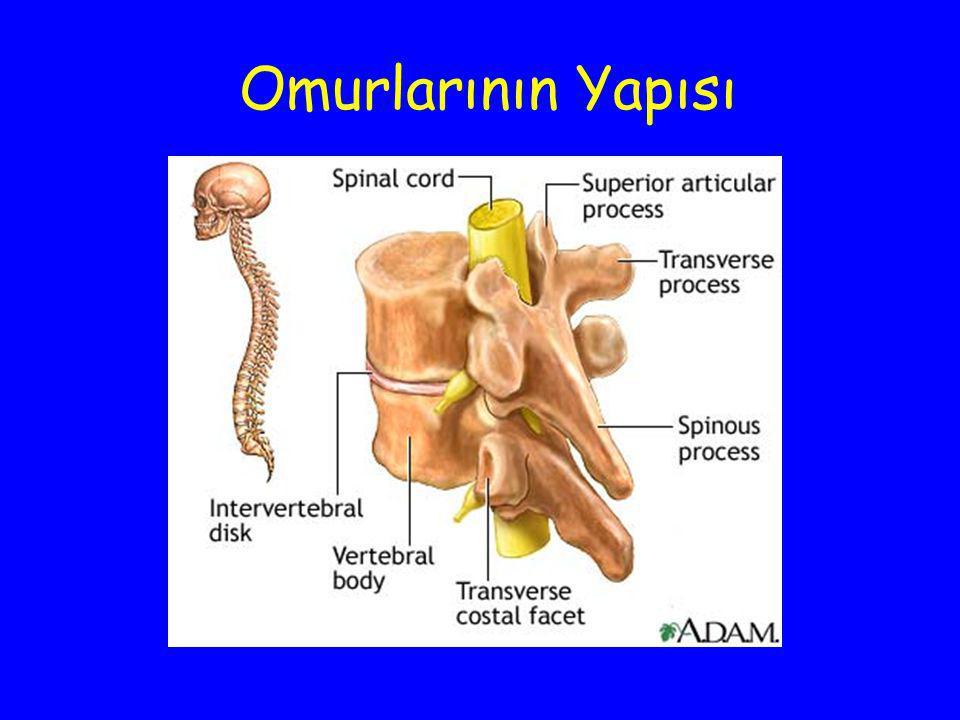 Omurlarının Yapısı