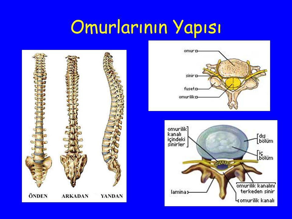 Vücudun çeşitli yerlerinden beyne dönen duyular veya beyinden vücuda dağılan emirler omurilik içinde seyreder.