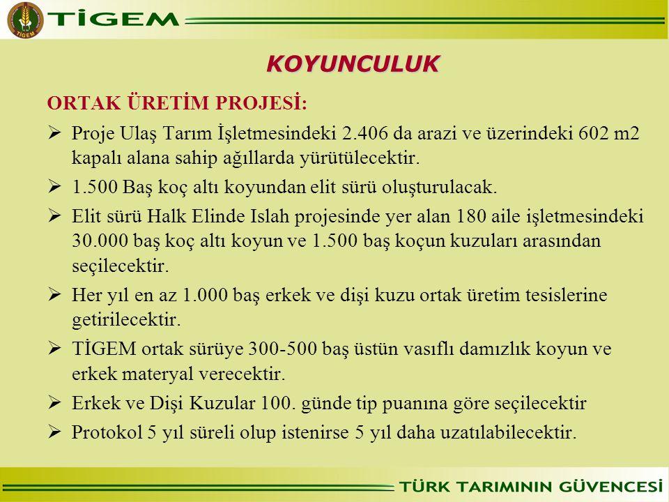 ORTAK ÜRETİM PROJESİ:  Proje Ulaş Tarım İşletmesindeki 2.406 da arazi ve üzerindeki 602 m2 kapalı alana sahip ağıllarda yürütülecektir.  1.500 Baş k