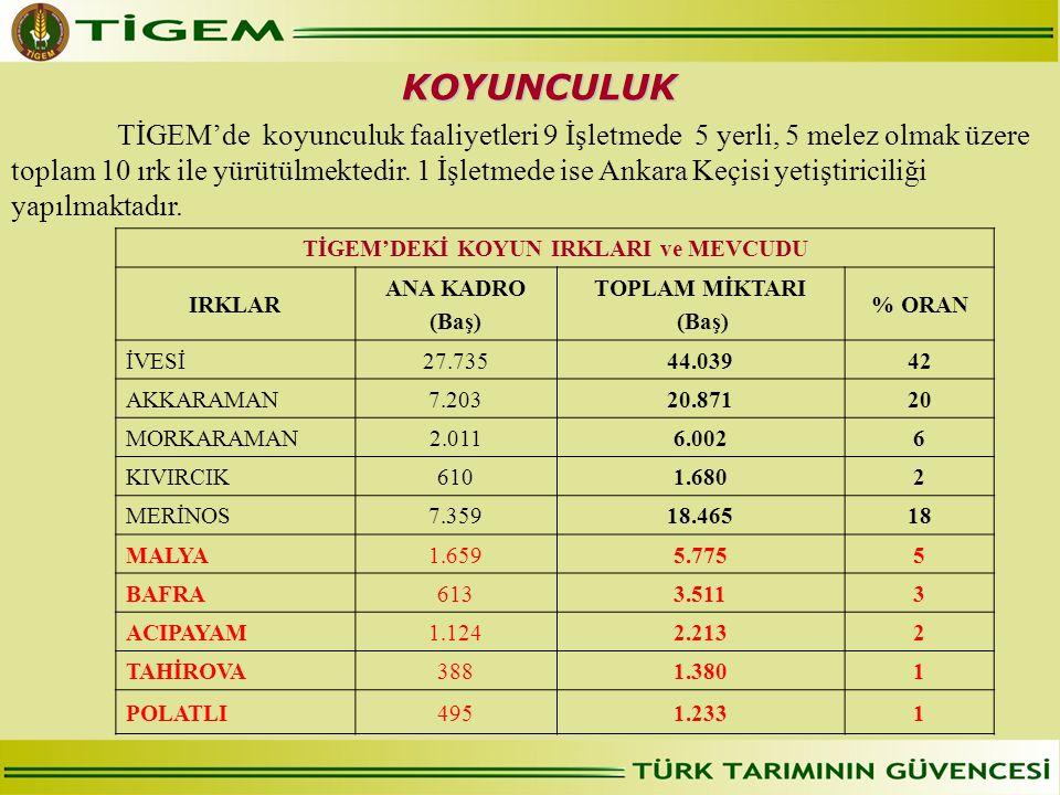 TİGEM'de koyunculuk faaliyetleri 9 İşletmede 5 yerli, 5 melez olmak üzere toplam 10 ırk ile yürütülmektedir. 1 İşletmede ise Ankara Keçisi yetiştirici
