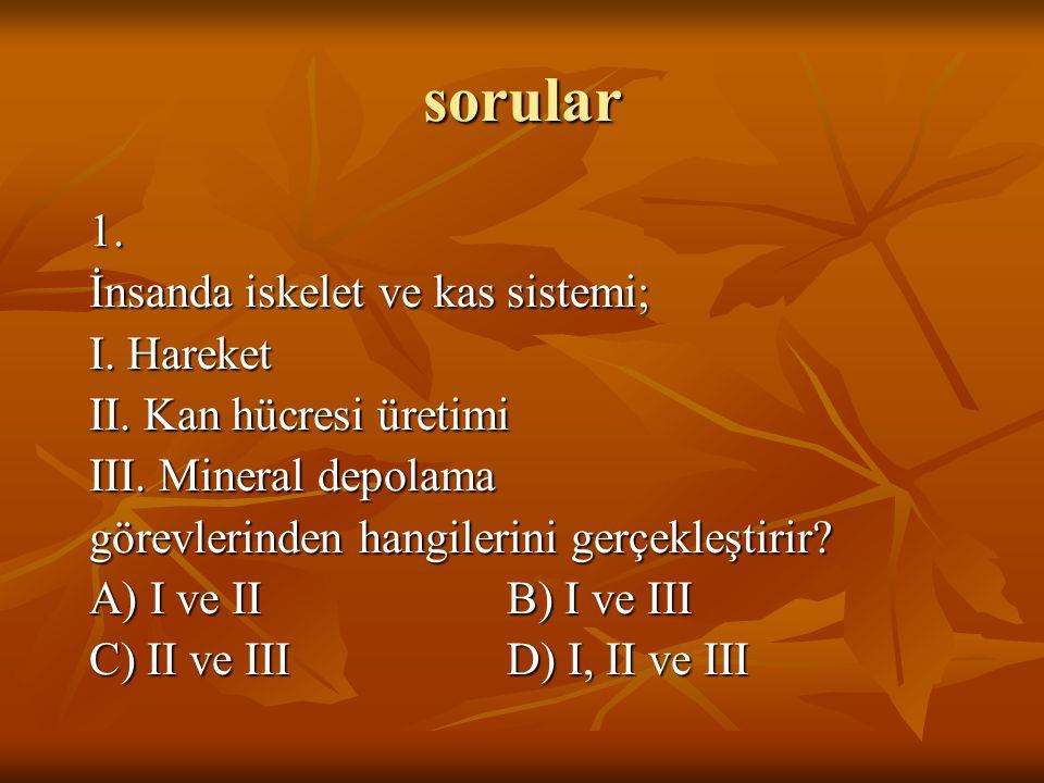 sorular 1. İnsanda iskelet ve kas sistemi; I. Hareket II. Kan hücresi üretimi III. Mineral depolama görevlerinden hangilerini gerçekleştirir? A) I ve