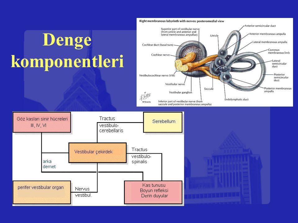 Denge komponentleri
