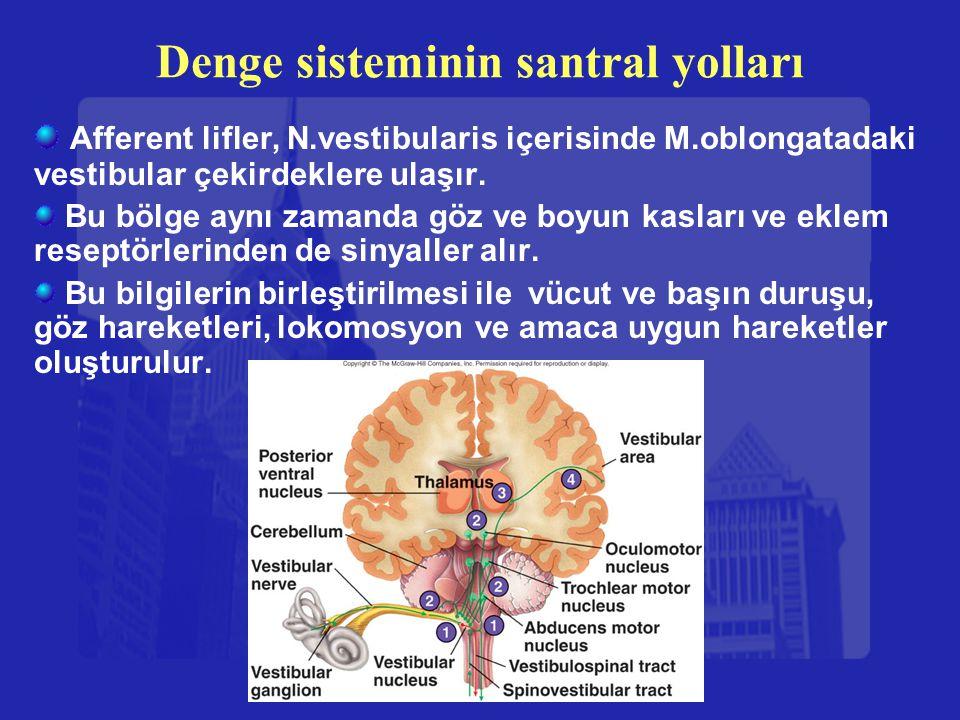 Denge sisteminin santral yolları Afferent lifler, N.vestibularis içerisinde M.oblongatadaki vestibular çekirdeklere ulaşır. Bu bölge aynı zamanda göz