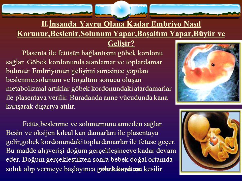 www.fendosyasi.com II.İnsanda Yavru Olana Kadar Embriyo Nasıl Korunur,Beslenir,Solunum Yapar,Boşaltım Yapar,Büyür ve Gelişir? Plasenta ile fetüsün bağ