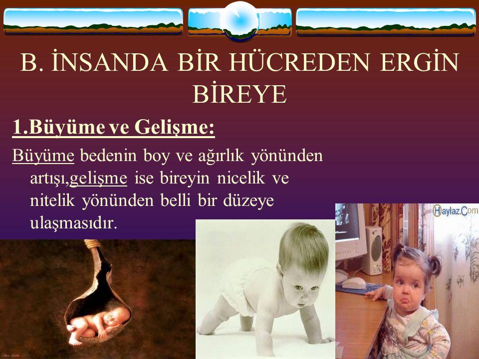 www.fendosyasi.com B. İNSANDA BİR HÜCREDEN ERGİN BİREYE 1.Büyüme ve Gelişme: Büyüme bedenin boy ve ağırlık yönünden artışı,gelişme ise bireyin nicelik