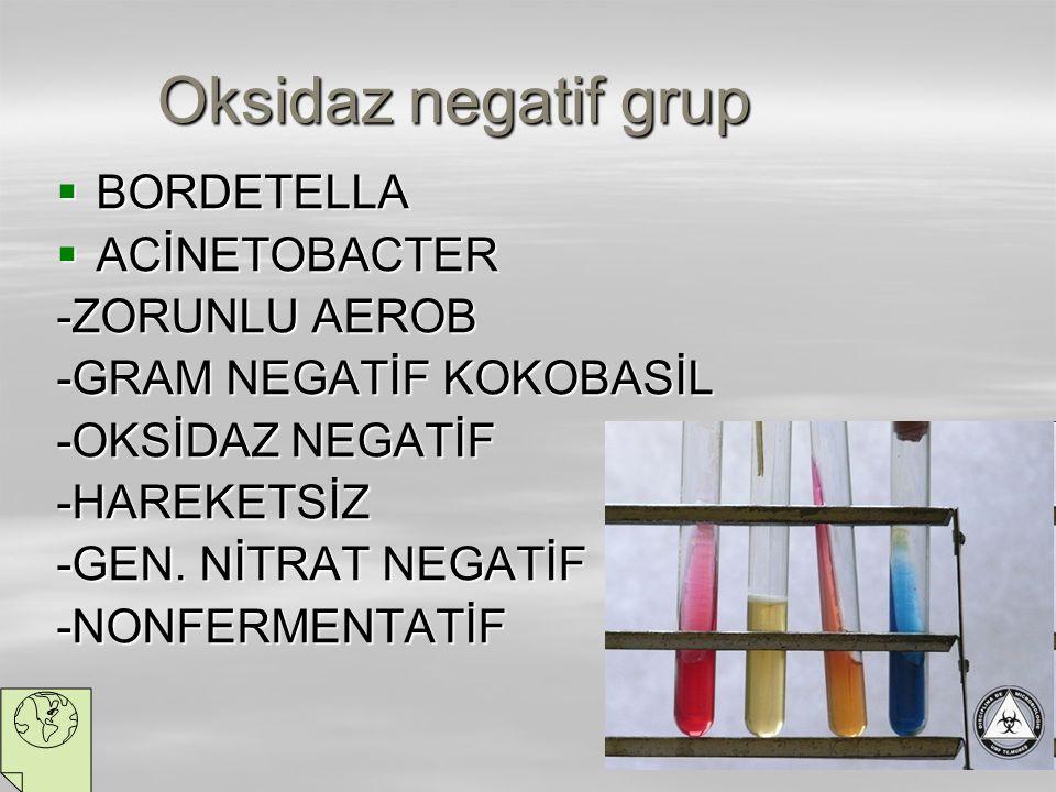 Oksidaz negatif grup  BORDETELLA  ACİNETOBACTER -ZORUNLU AEROB -GRAM NEGATİF KOKOBASİL -OKSİDAZ NEGATİF -HAREKETSİZ -GEN. NİTRAT NEGATİF -NONFERMENT