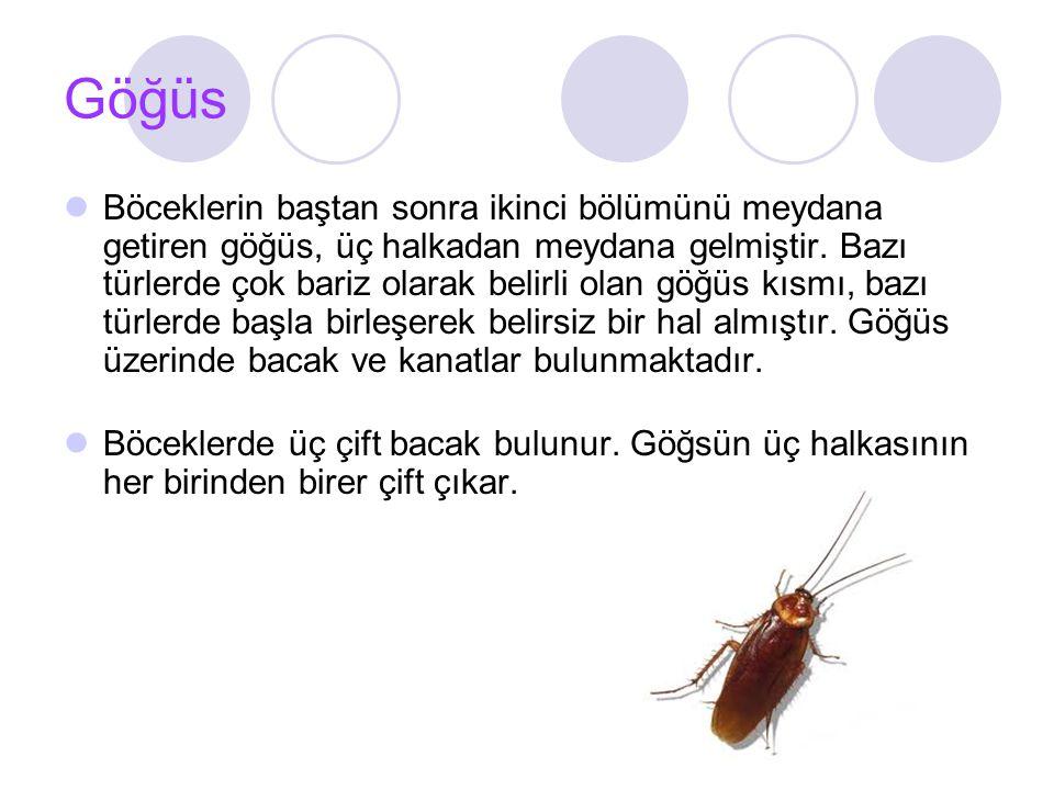 Karın Böceklerin üçüncü bölümünü meydana getiren karın genellikle 10 halkadan meydana gelmiştir.
