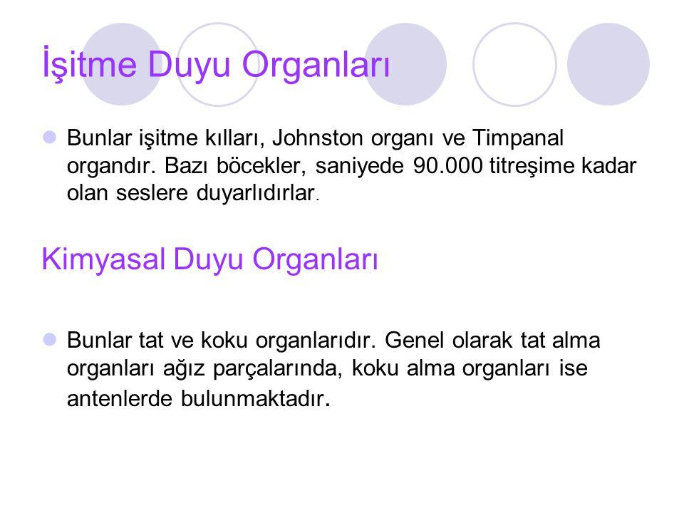 İşitme Duyu Organları Bunlar işitme kılları, Johnston organı ve Timpanal organdır.