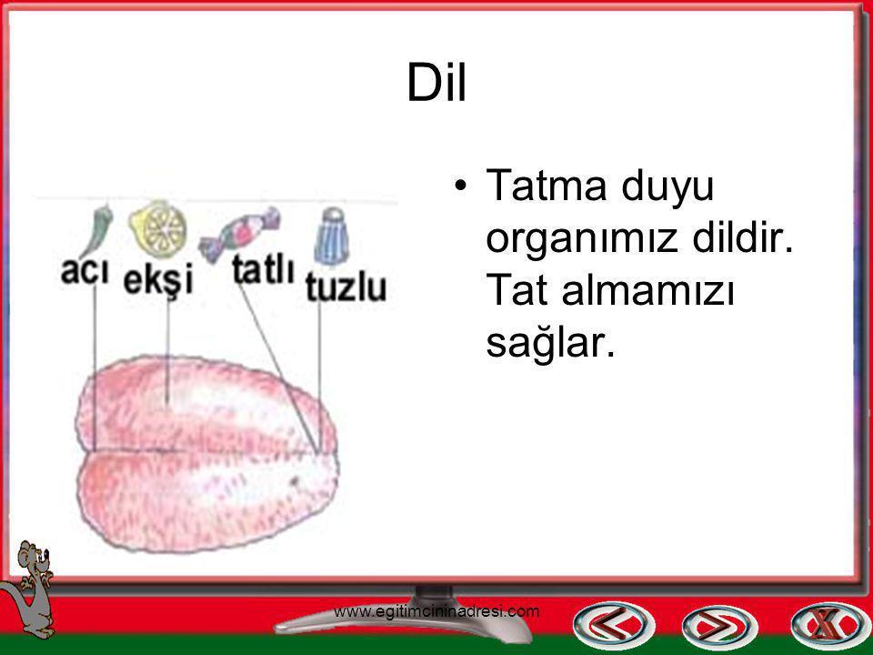 Kulak İşitme duyu organımızdır. Etrafımızdaki sesleri duymamızı sağlar. www.egitimcininadresi.com