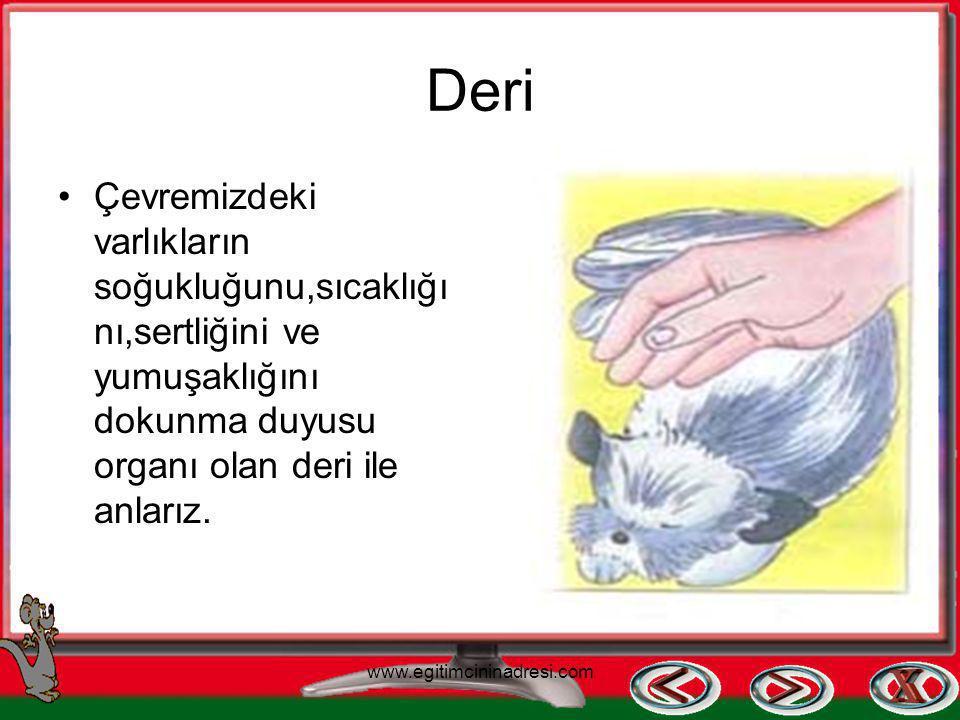Dil Tatma duyu organımız dildir. Tat almamızı sağlar. www.egitimcininadresi.com