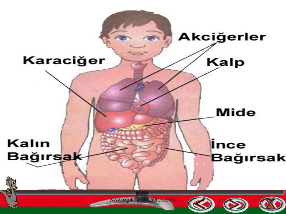 İç Organlarımız Kalp Akciğerler Karaciğer Mide Bağırsaklar Böbrekler www.egitimcininadresi.com