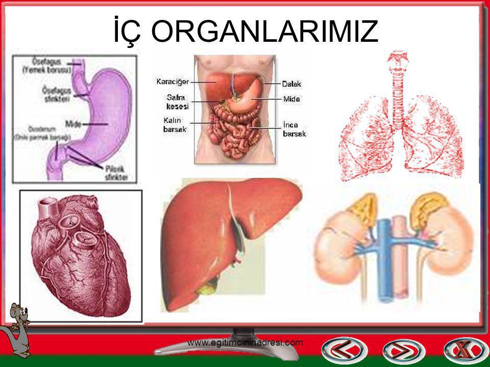 İÇ ORGANLARIMIZ www.egitimcininadresi.com